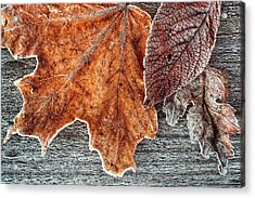 Jack Frost's Touch Acrylic Print
