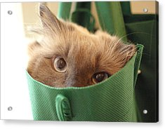 Jack In The Bag Acrylic Print
