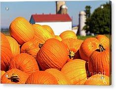 Jack-o-lantern Pumpkins At Farm Acrylic Print