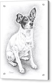 Jack Russell Acrylic Print