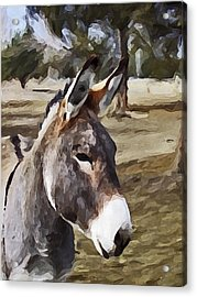 Jack Acrylic Print by Susie Fisher