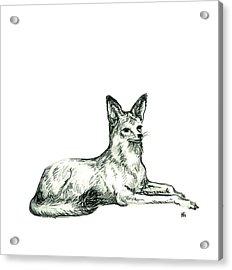 Jackal Sketch Acrylic Print