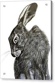 Jackrabbit Jock Acrylic Print