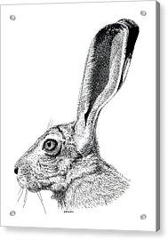 Jackrabbit Acrylic Print