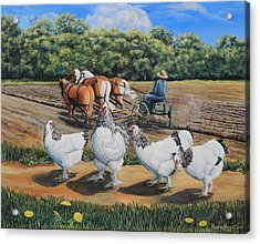 Jacobs Plowing And Light Bramah Chickens Acrylic Print