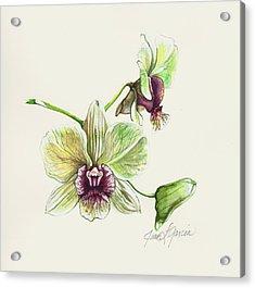 Jade Dendrobium Acrylic Print