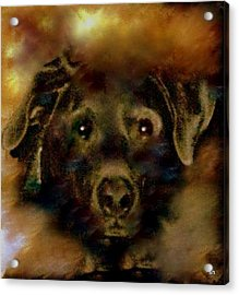 Jade-my Special Lab Acrylic Print by Sherri's Of Palm Springs
