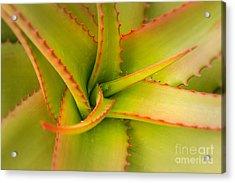 Jagged Aloe Acrylic Print