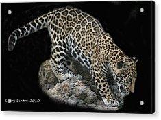 Jaguar Cub Acrylic Print by Larry Linton