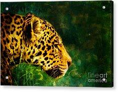 Jaguar In The Grass Acrylic Print