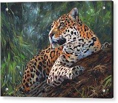 Jaguar In Tree Acrylic Print by David Stribbling