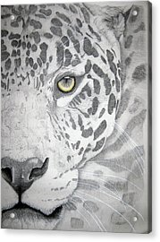 Acrylic Print featuring the drawing Jaguar by Mayhem Mediums