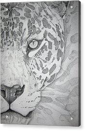 Jaguar Pointillism Acrylic Print by Mayhem Mediums