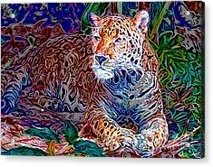 Jaguar Acrylic Print by Zedi