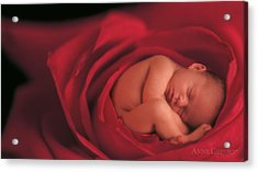 Jake In Rose Acrylic Print by Anne Geddes