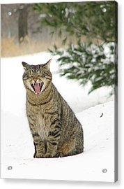 Jake In The Snow Acrylic Print by Laurie With