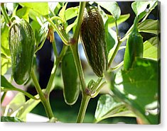 Jalapenos Acrylic Print by Heather S Huston