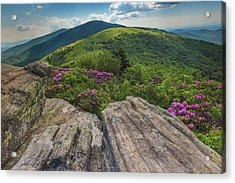 Jane Bald Rhododendrons Acrylic Print