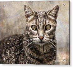 Janie's Kitty Acrylic Print