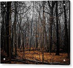 January Forest Rains Acrylic Print