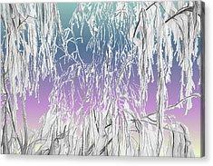 January Hoarfrost Acrylic Print