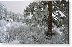 January On Kamiak Butte Acrylic Print by Jerry McCollum