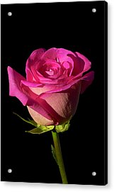 January Rose Acrylic Print by Gary Dean Mercer Clark