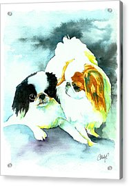 Japanese Chin Dog Acrylic Print