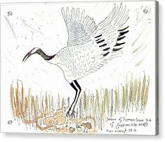 Japanese Crane And Her Nest Acrylic Print