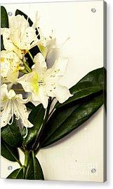 Japanese Flower Art Acrylic Print