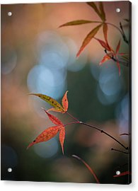 Japanese Maple Leaves Meditation Acrylic Print by Mike Reid