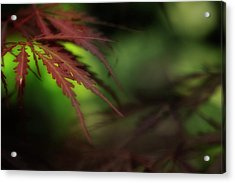 Acrylic Print featuring the photograph Japanese Maple by Mike Eingle