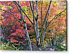 Japanese Maples In Full Color Acrylic Print