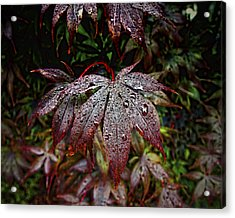 Japanese Maples In The Rain Acrylic Print by Michael Putnam