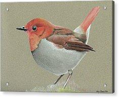 Japanese Robin Acrylic Print