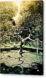 Japanese Threadleaf Acrylic Print by Colleen Kammerer