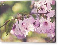 Japanese Tree In Bloom Acrylic Print
