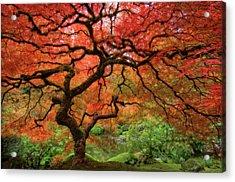 Japenese Garden, Portland Acrylic Print