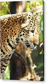 Jaquar 2 Acrylic Print by Russell  Barton