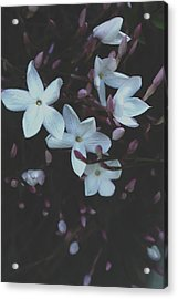 Acrylic Print featuring the mixed media Jasmine Dream- Photography By Linda Woods by Linda Woods