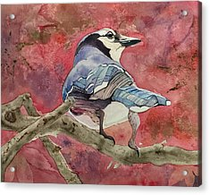 Jay In The Japanese Maple Acrylic Print