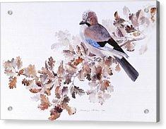 Jay On A Dried Oak Branch Acrylic Print