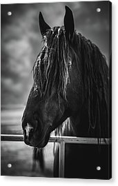 Acrylic Print featuring the photograph Jay The Rasta Horse by Debby Herold