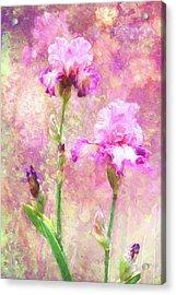 Jazzy Irises Acrylic Print