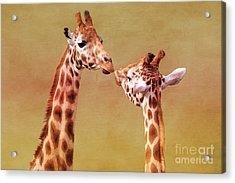 Je T'aime Giraffes Acrylic Print