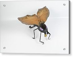 Jeanetic Violet-eyed Fly Acrylic Print by Michael Jude Russo
