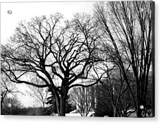 Jefferson Memorial - Distant View Acrylic Print by Fareeha Khawaja