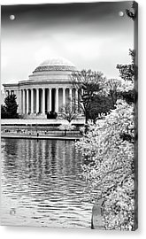 Jefferson Memorial Cherry Blosum Time Acrylic Print