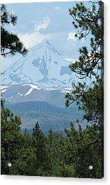 Acrylic Print featuring the photograph Jefferson Pines by Laddie Halupa