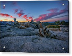 Acrylic Print featuring the photograph Jeffrey Pine Dawn by Rick Berk